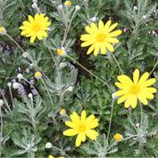 育てやすい秋の花