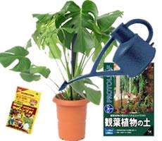 観葉植物の基礎知識