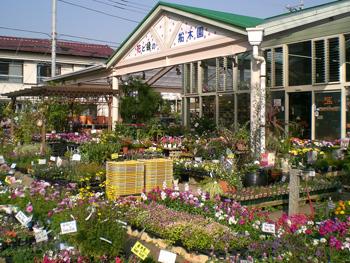 (ガーデニング・園芸用品店・フラワーショップ)船木園