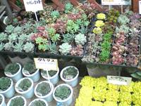 多肉植物、サボテン