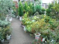 植木や果樹