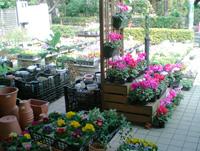 鉢花、プランター、陶器鉢