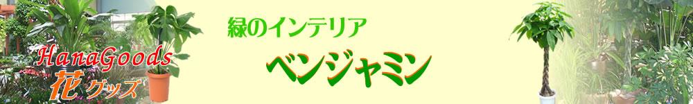 緑のインテリア・ベンジャミン