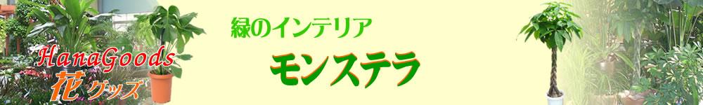 緑のインテリア・モンステラ