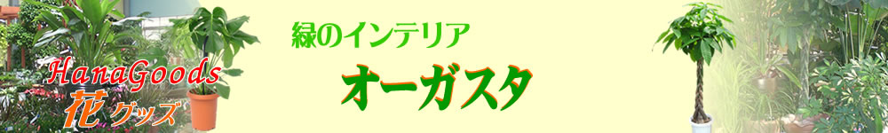 緑のインテリア・オーガスタ(ニコライ)