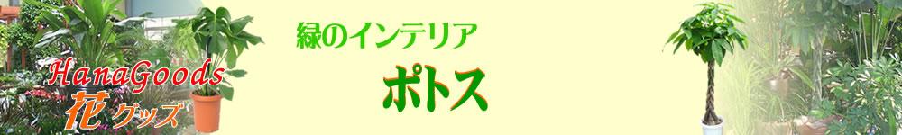 緑のインテリア・ポトス