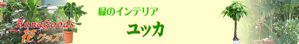 緑のインテリア・ユッカ