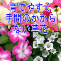 育てやすい花