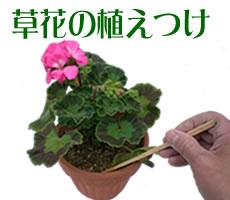 草花の植えつけ